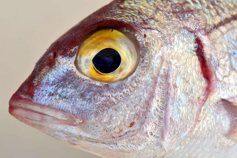 怀孕初期能不能吃鱼头孕早期保胎必吃的7大最佳食物